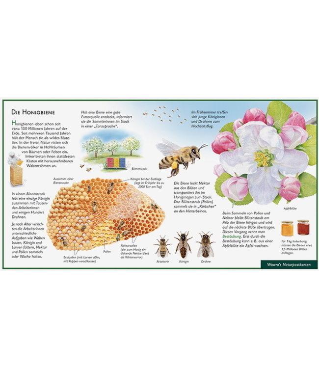 Natur-Verlag Wawra Honigbiene