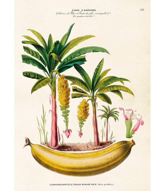Sköna Ting Bananenbaum