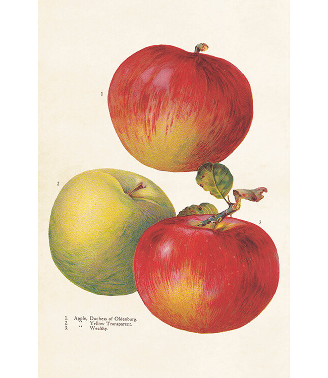Sköna Ting Äpfel