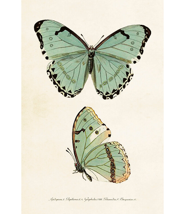 Sköna Ting Schmetterlinge