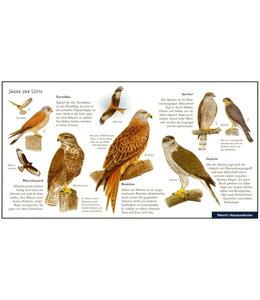 Natur-Verlag Wawra Greifvögel