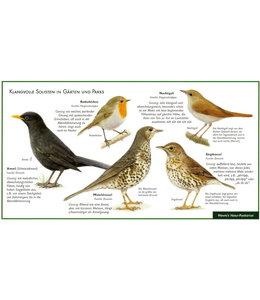Natur-Verlag Wawra Singvögel-Amsel, Drossel, Nachtigall