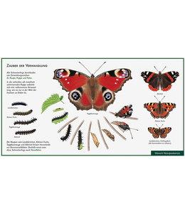 Natur-Verlag Wawra Schmetterling-Zauber der Verwandlung