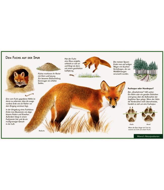 Natur-Verlag Wawra Dem Fuchs auf der Spur