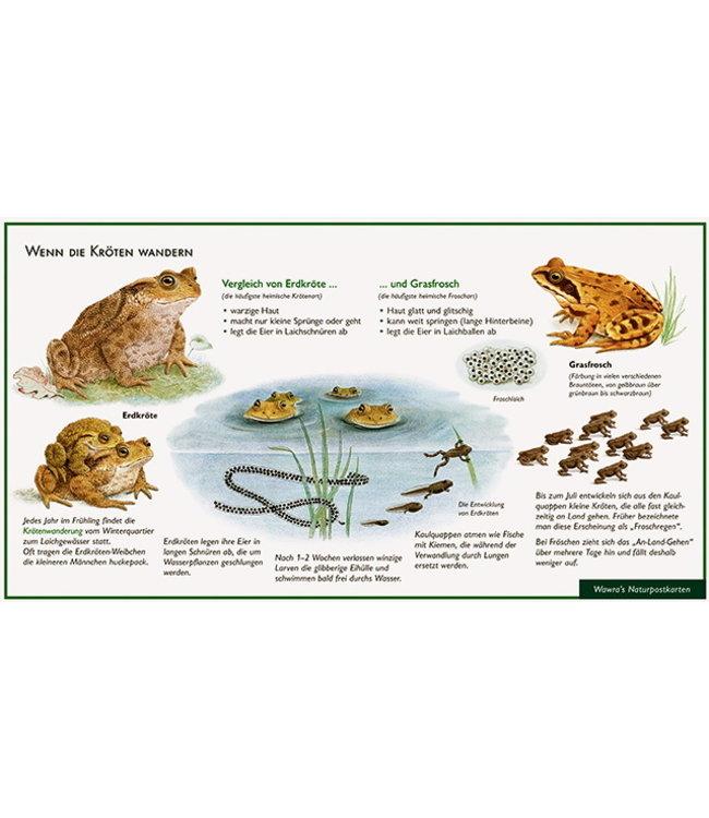Natur-Verlag Wawra Erdkröte und Grasfrosch