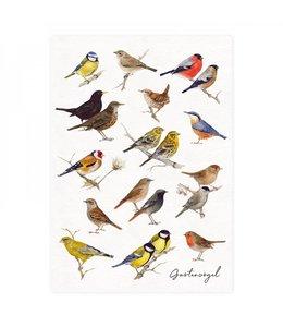 Daniela Drescher Gartenvögel