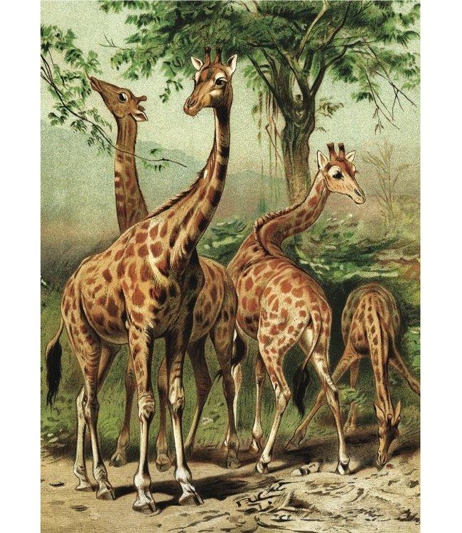 schnurkarten Giraffen