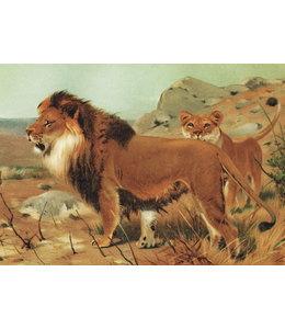 schnurkarten Afrikanischer Löwe