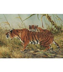 schnurkarten Tiger