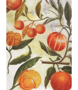 schnurkarten Früchte
