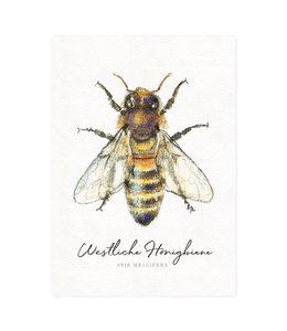 Daniela Drescher Honigbiene