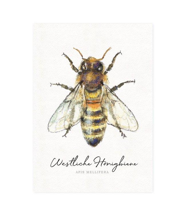 Daniela Drescher Westliche Honigbiene