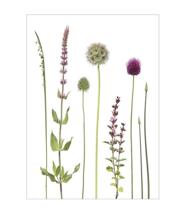 Lang & Schrödter Verlag Grünrosa Blüten