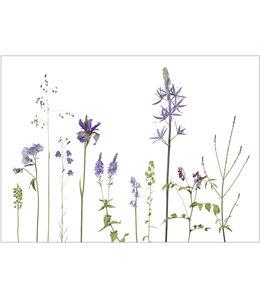 Lang & Schrödter Verlag Wiesenblumen in blau