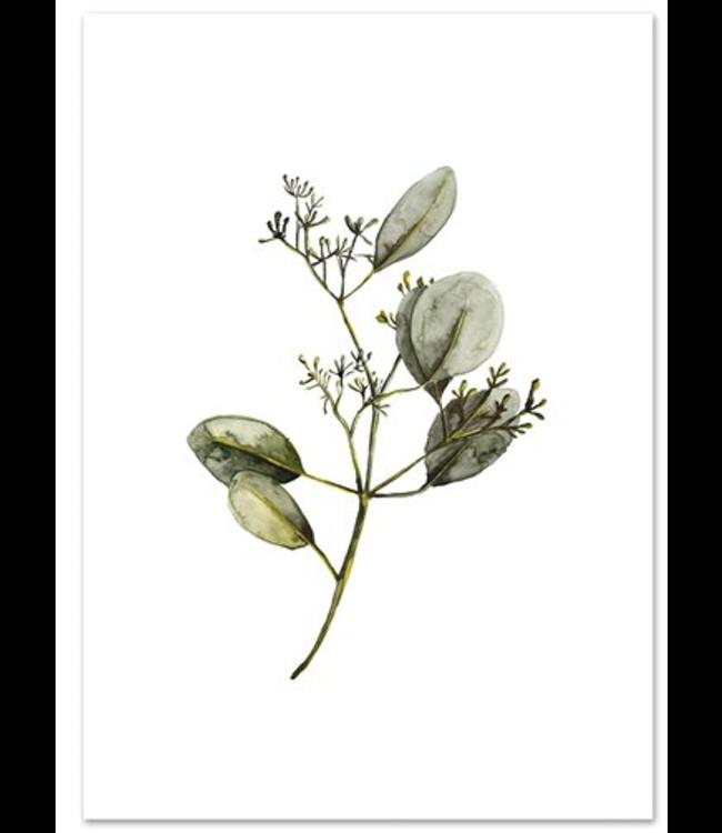 LEO LA DOUCE Eucalyptus