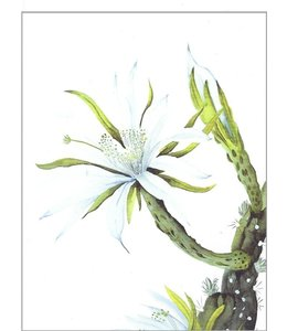 LEO LA DOUCE Weiße Kaktusblüte