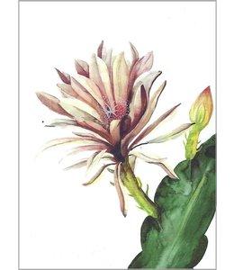 LEO LA DOUCE Rote Kaktusblüte