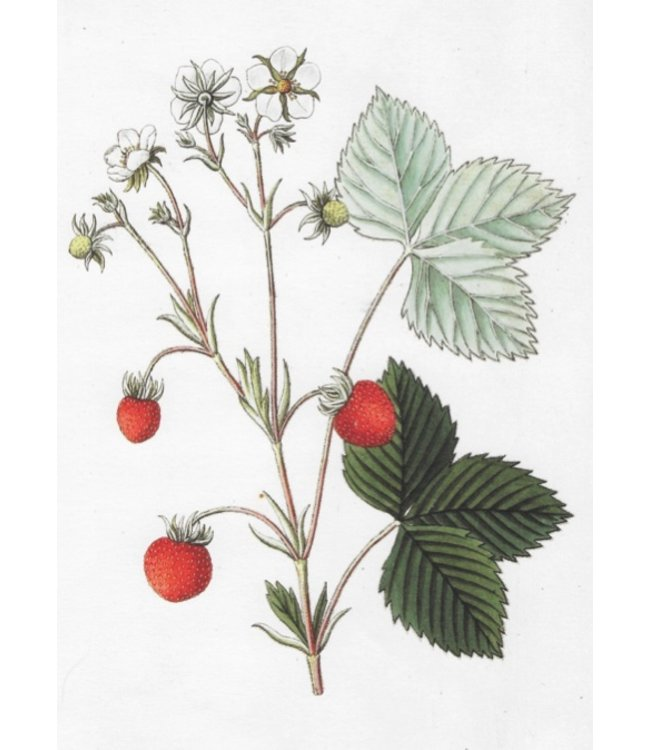schnurkarten Erdbeere