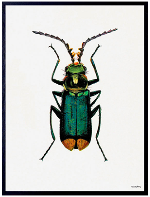VanillaFly VanillaFly Poster Bug 30x40