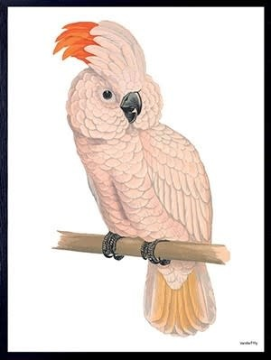 VanillaFly VanillaFly Poster Pink Parrot 20x25
