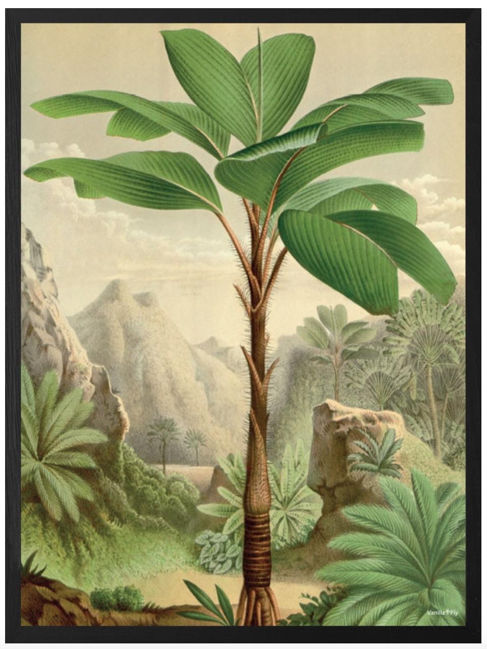 VanillaFly VanillaFly Poster Jungle 30x40