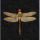 VanillaFly VanillaFly Poster Dragonfly Black 30x40