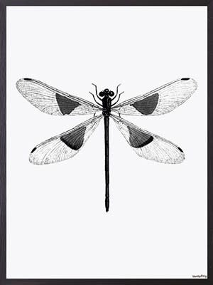 VanillaFly VanillaFly Poster Spotted Dragonfly 20x25