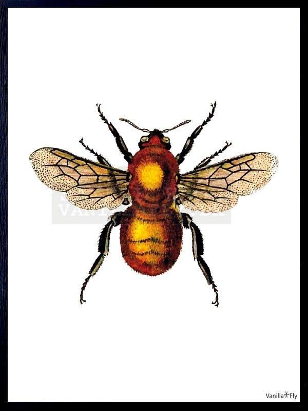 VanillaFly VanillaFly Poster Yellow Bee 20x25