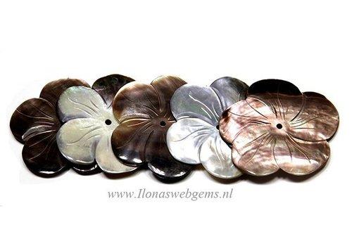 5 stuks Black lip shell bloem