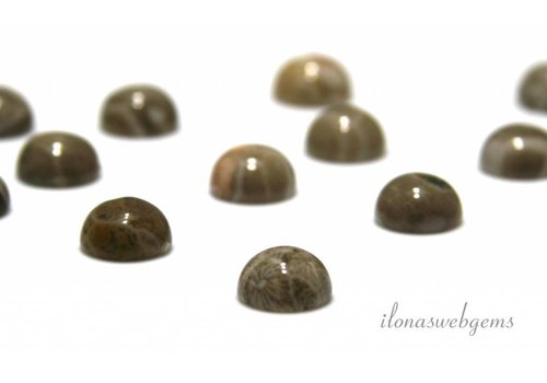 Fossil coral cabochon 10mm