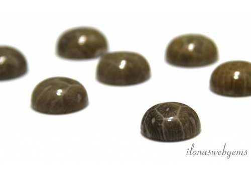 Fossile Korallen Cabochon 12mm