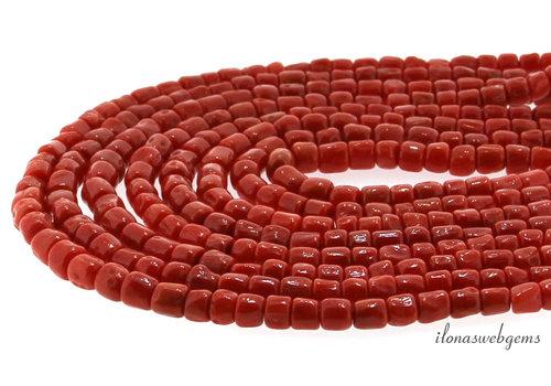 Rote Koralle 'Corallium Rubrum'