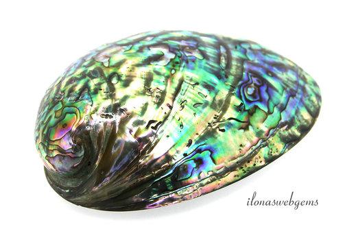 Abalone schelp ca. 11x9cm