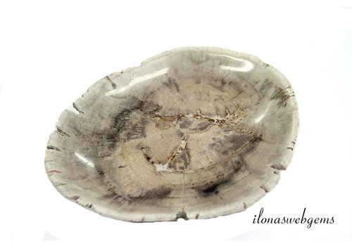 Versteend houten plate/ kom