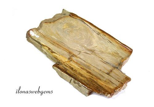 Versteend houten plak