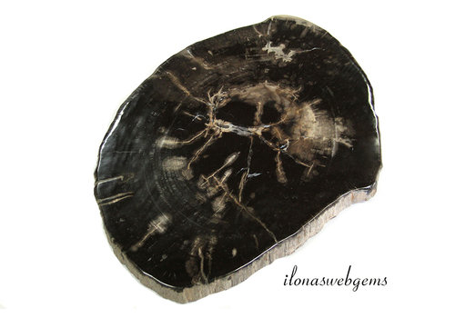Petrified wooden disc