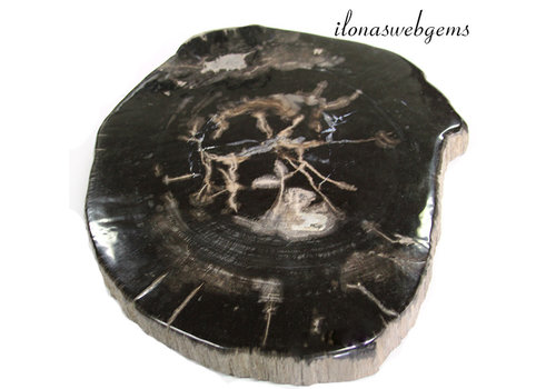 Fossilized wooden disc