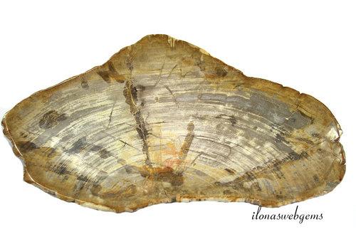 Petrified wood shell