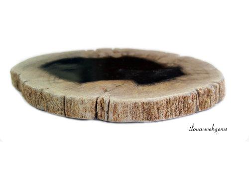 Versteend houten schijfje