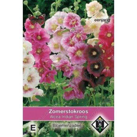 Van Hemert & Co Stokroos (Alcea rosea annua) 'Indian Spring'