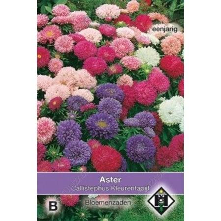 Van Hemert & Co Aster chinensis 'Kleurentapijt'