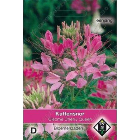 Van Hemert & Co Kattensnor (Cleome hassleriana) 'Cherry Queen'