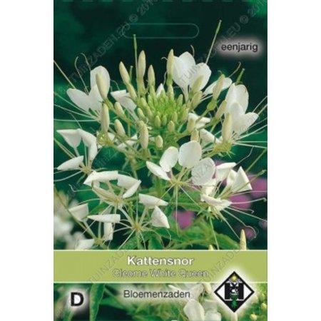Van Hemert & Co Kattensnor (Cleome hassleriana) 'White Queen'