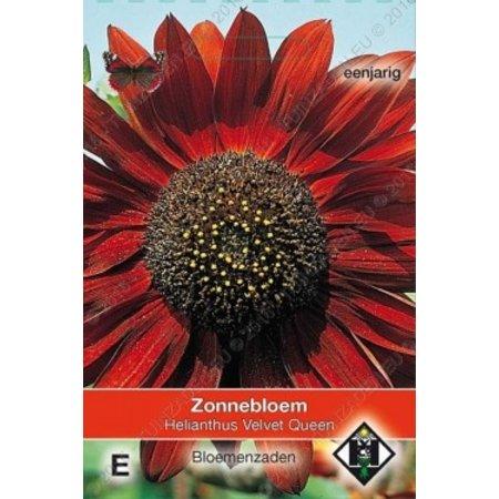 Van Hemert & Co Zonnebloem (Helianthus annuus) 'Velvet Queen'