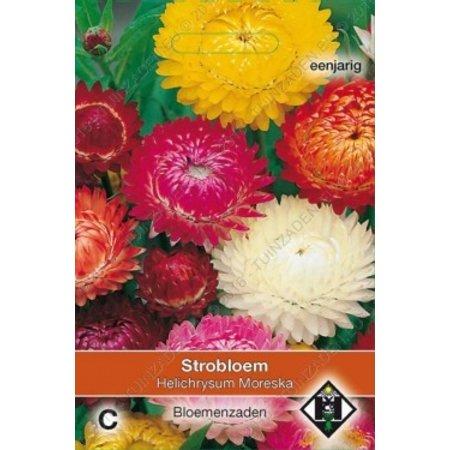 Van Hemert & Co Strobloem (Helichrysum bracteatum) 'Moreska'