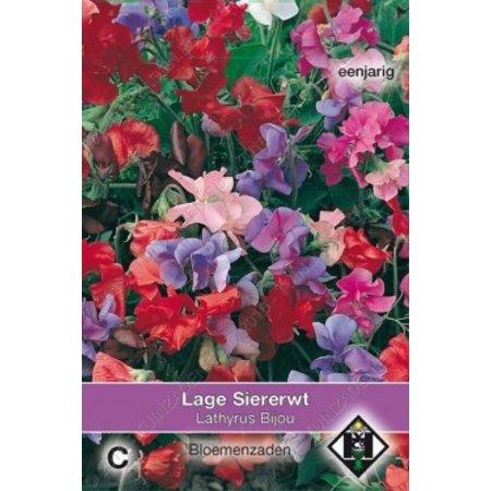 Van Hemert & Co Lage siererwt (Lathyrus odoratus) 'Bijou'