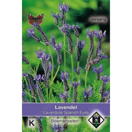Van Hemert & Co Lavendel (Lavandula multifida) 'Spanish Eyes'