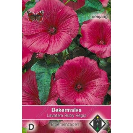 Van Hemert & Co Bekermalva (Lavatera trimestris) 'Ruby Regis'