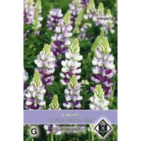Van Hemert & Co Lupine (Lupinus hartwegii) 'Avalune Lilac'