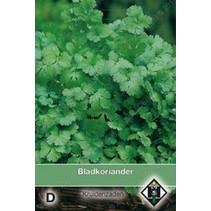 Bladkoriander / Coriandrum